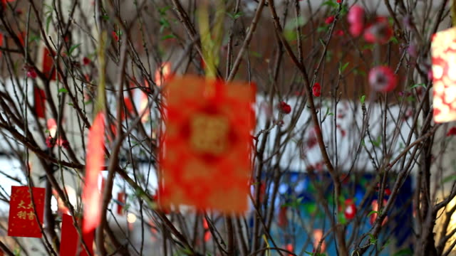 Red packet hanging on tree in Chinese New Year