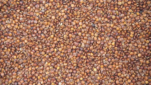 rote quinoa-samen als hintergrund - glutenfrei stock-videos und b-roll-filmmaterial
