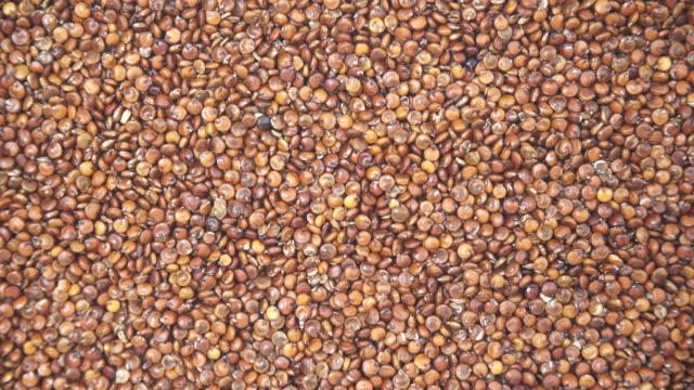 rote quinoasamen als hintergrund - glutenfrei stock-videos und b-roll-filmmaterial