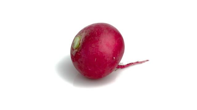 vidéos et rushes de radis rouges - angiosperme