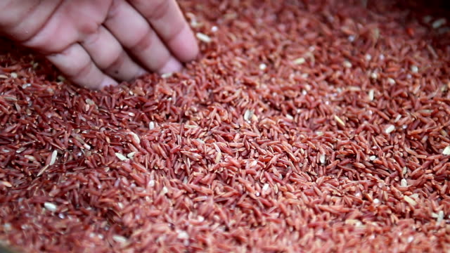 red rice video