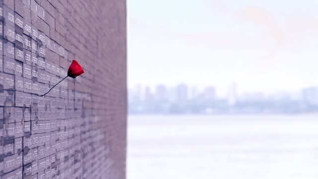"""Red Rose In The Remembrance Park In Buenos Aires, Argentina. Parque de la Memoria is a public space situated in front of the Rio de la Plata estuary in Buenos Aires. It is a memorial to the victims of the 1976–83 military regime. About 300 meters north of the park is a military airport that was utilized for the """"flights of death"""" during which victims of the Military Junta government were thrown into the river and sea. Full HD. domination stock videos & royalty-free footage"""