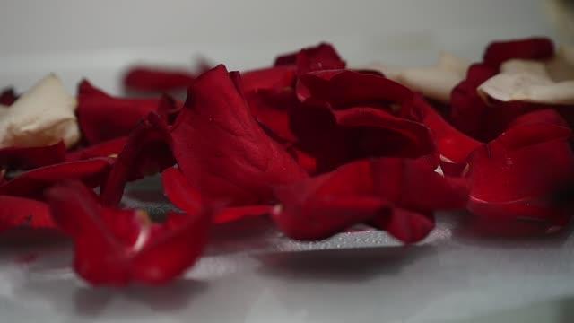 vídeos y material grabado en eventos de stock de pétalos de rosa rojos sobre un fondo blanco - letra s