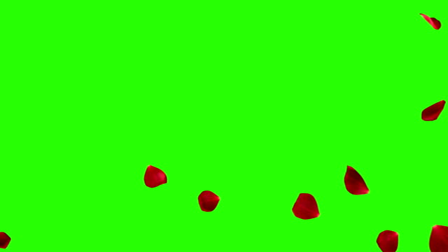 red rose petals screen transition horizontal flying flowing on chroma key, green screen background, with alpha channel, holiday love, relationship and valentine day - płatek filmów i materiałów b-roll