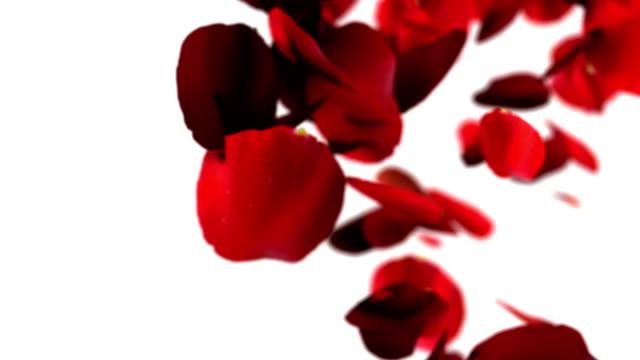 vídeos y material grabado en eventos de stock de transición de pétalos de rosa roja - pétalo