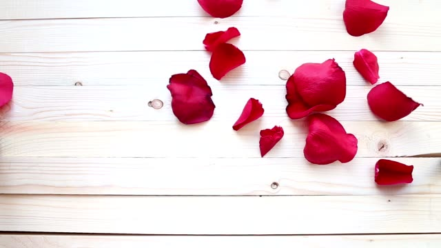 Red rose petals  wooden background video