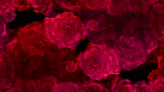 Red roses buds on a background for wedding video