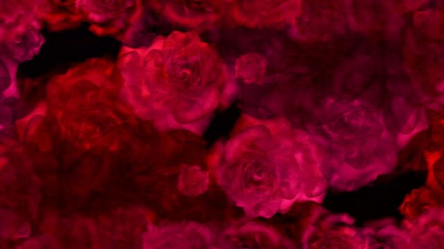 röda rosor knoppar på en bakgrund för bröllops video - ros bildbanksvideor och videomaterial från bakom kulisserna