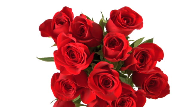 Red roses video