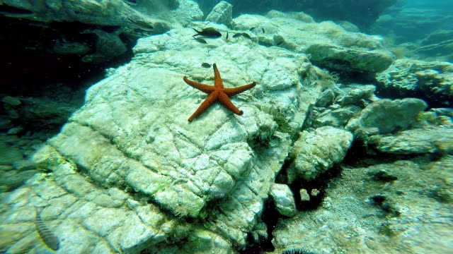Red Sea Star on Sea Bed video