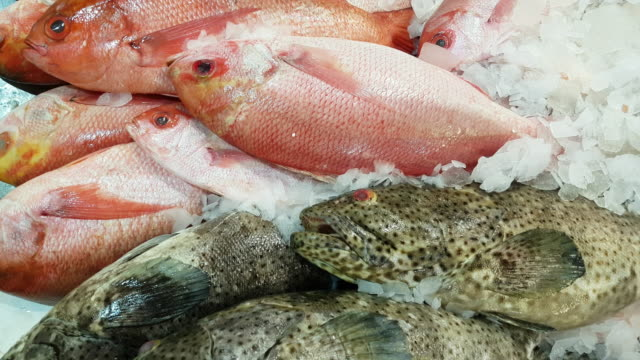 red snapper and black spotted grouper on fish market display - banchi di pesci video stock e b–roll