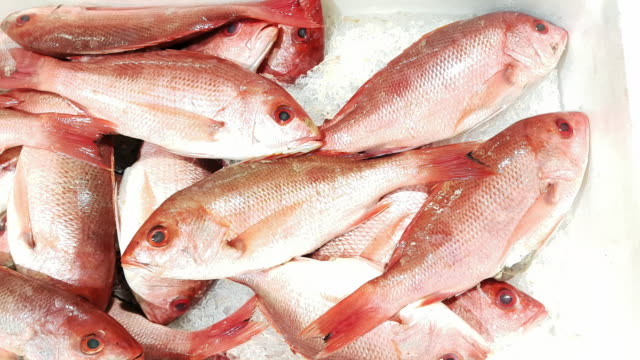 red snapper on fish market display - луциан стоковые видео и кадры b-roll