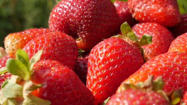 vidéos et rushes de fond de fruit de fraise rouge inclinaison lente 4k - couleur saturée