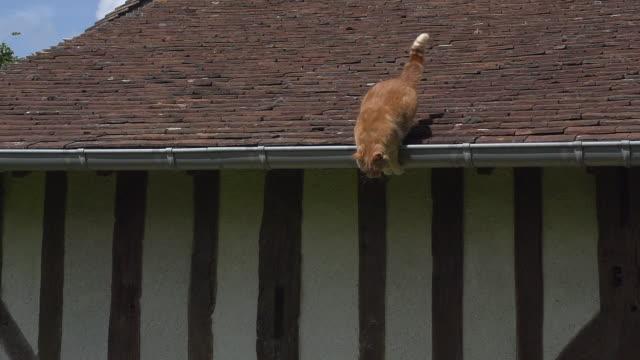 赤トラ猫屋根、ノルマンディー、スローモーションから跳躍 - 屋根点の映像素材/bロール