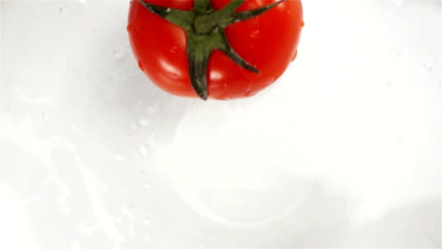 Red tomato plunging in water. White background video