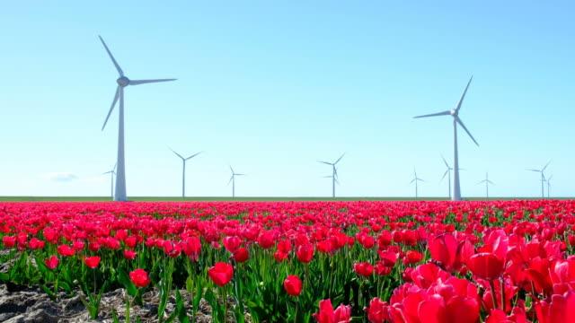 美しい春の日の中にバック グラウンドで風力タービンでフィールドに赤いチューリップ - チューリップ点の映像素材/bロール