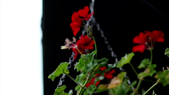 Red wedding arrangement video
