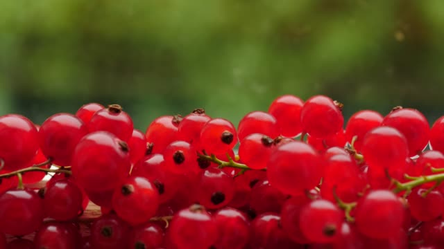 redcurrant berries on green bokeh - ribes rosso video stock e b–roll