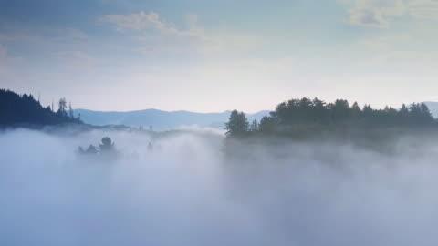 vídeos de stock e filmes b-roll de redwood forest reveal - aerial shot - nevoeiro