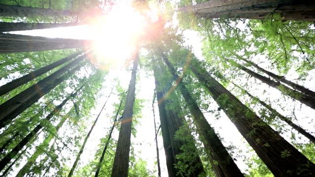 redwood national park - staatspark stock-videos und b-roll-filmmaterial