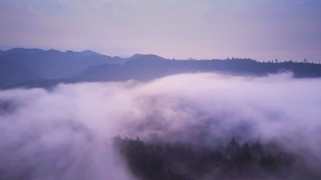 Redwood Trees Poking Out of Fog - Aerial Shot видео