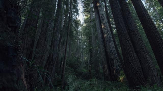 redwoods 02 - staatspark stock-videos und b-roll-filmmaterial