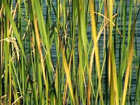 reed i wody - opis fizyczny filmów i materiałów b-roll