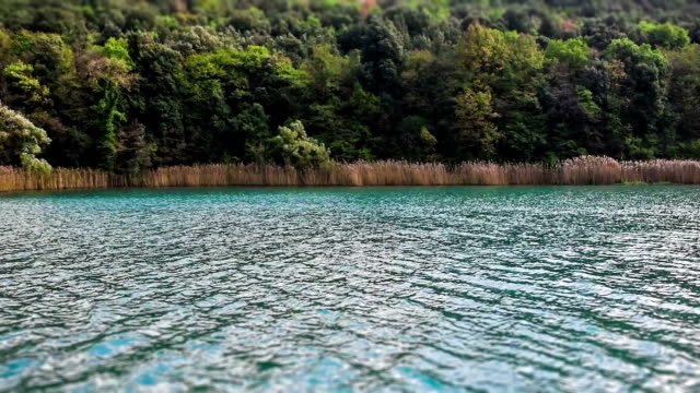 reed vegetation auf der toblino lake, trentino alto adige, italien - rohrblattinstrument stock-videos und b-roll-filmmaterial