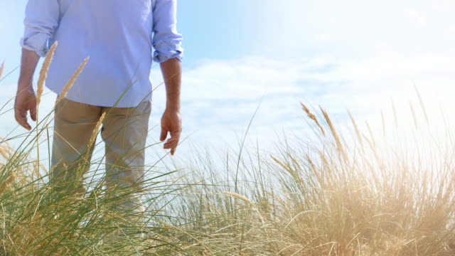 reeds and dunes, man walking back view. - paesaggio marino video stock e b–roll