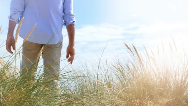 reeds and dunes, man walking back view. - krajobraz morski filmów i materiałów b-roll