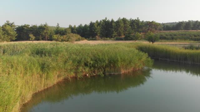 stockvideo's en b-roll-footage met riet in een lake sakli göl (hidden lake of marsh), honaz, denizli, turkije - {{asset.href}}