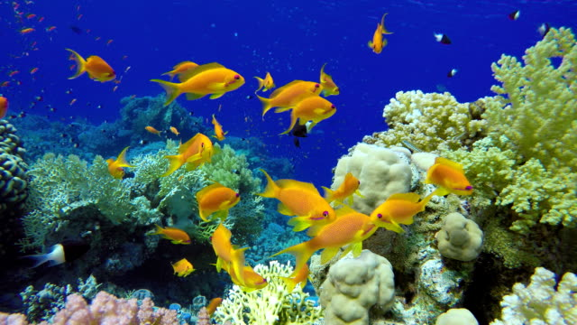 Reef And Beautiful Fish Underwater Life In The Ocean Tropical Stock Video More Clips Of Animal 1022726784