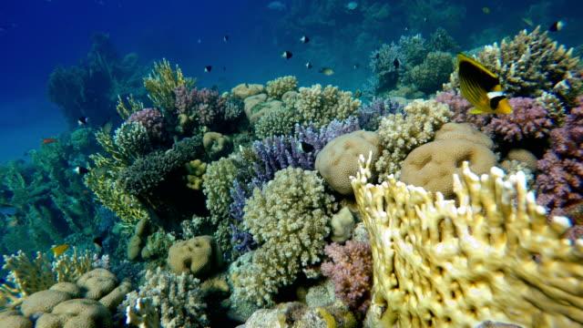 vídeos y material grabado en eventos de stock de arrecife y hermosos peces. vida submarina en el océano. pescado tropical. - coral cnidario