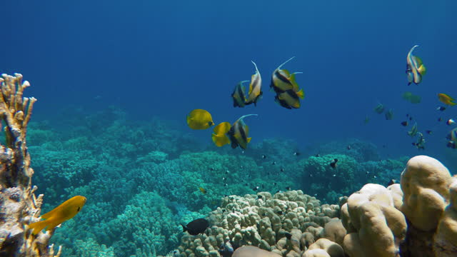 Reef and beautiful fish. Underwater life in the ocean. Tropical fish. video