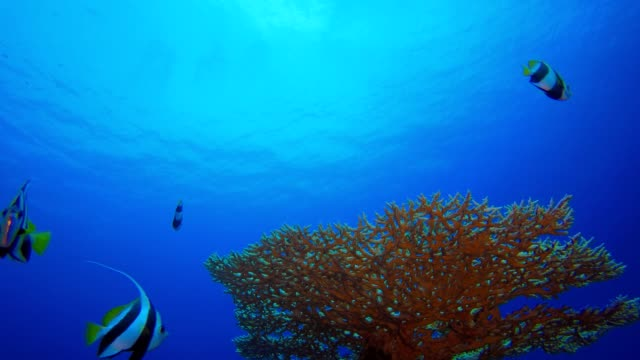 Reef Coral Garden Underwater Life Tropical underwater sea fish. Underwater fish reef marine. Soft and hard corals. Underwater fish garden reef. Reef coral scene. Coral garden seascape. Colourful tropical coral reefs. aquatic organism stock videos & royalty-free footage