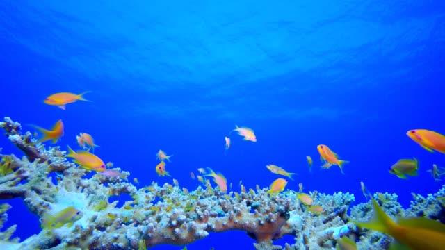 riff koralle tropischen garten blau orange - aquarium oder zoo stock-videos und b-roll-filmmaterial