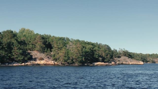 reef tallskog växer på en skärgårds ö i stockholm - swedish nature bildbanksvideor och videomaterial från bakom kulisserna