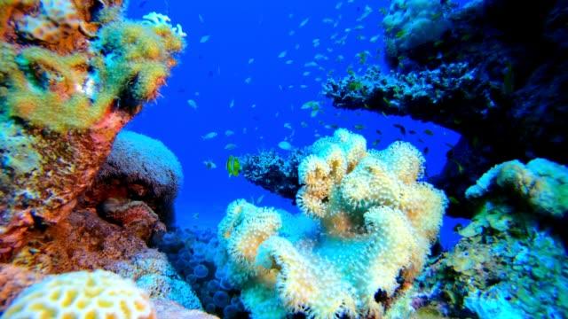 riff weichkorallen-clownfisch - riff stock-videos und b-roll-filmmaterial
