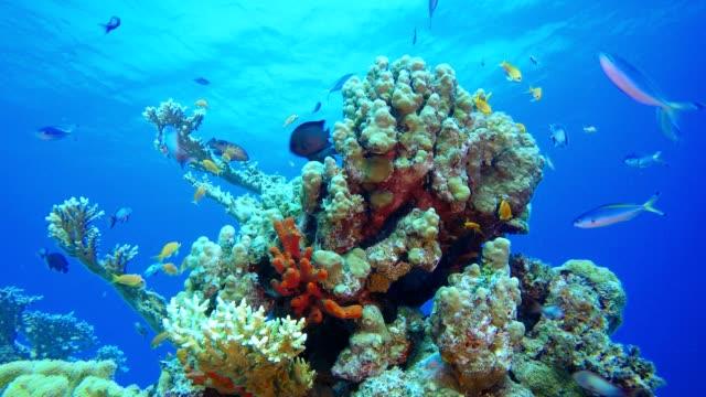 珊瑚礁水下熱帶珊瑚花園。 - 氧氣筒 個影片檔及 b 捲影像