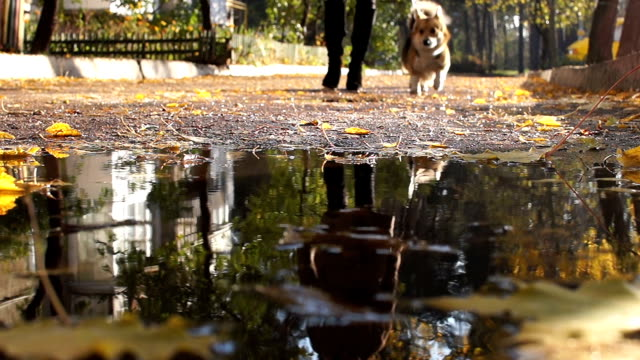 Reflection in a puddle. The dog walks with the hostess down the street. video