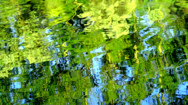 Reflection in lake Reflection in lake water saturated color stock videos & royalty-free footage