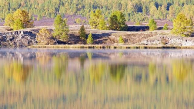 カラマツ山湖 Dzhangyskol Eshtyke 高原の水として、秋の森を映し出す。アルタ。 ビデオ