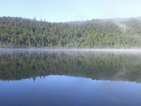 riflessi nell'acqua di lago loopable - pinacee video stock e b–roll