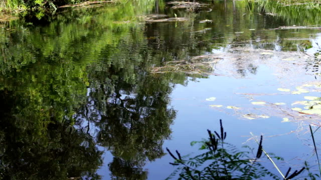 Reflections of branches trees and foliage on the water surface of the river. Reflections of trees branches and foliage on the water surface of the river. duckweed stock videos & royalty-free footage