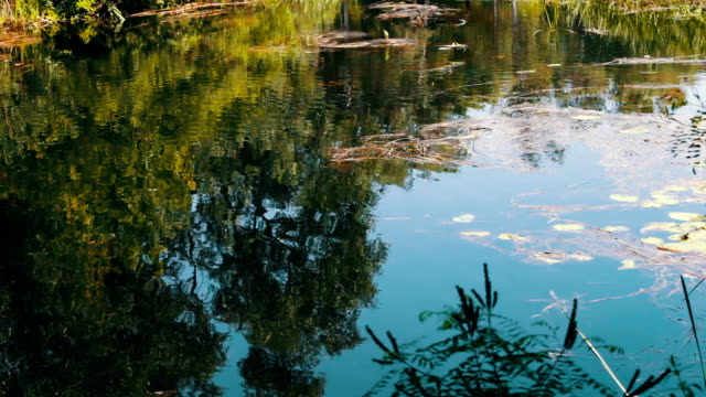 Reflections of branches trees and foliage on the water surface of the river. video