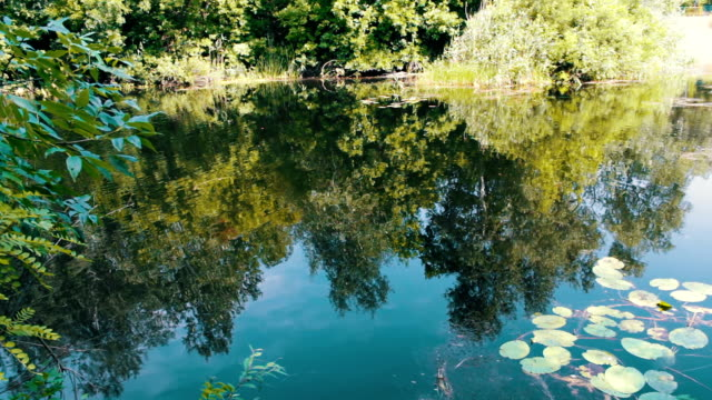 Reflections of trees, foliage and water lilies are swaying on the watery surface of the river video