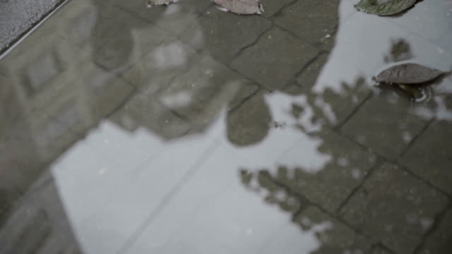 reflections on puddle and legs of the walking people - rack focus video stock e b–roll