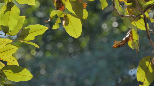 Reflective light of water on leaf. video