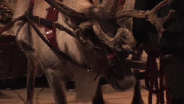 トナカイとクリスマスのそり 2 HD &PAL ビデオ