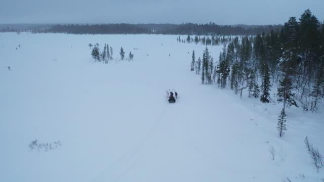 冬の季節に深い雪の森にトナカイのそり - イヌ科点の映像素材/bロール